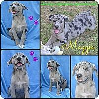 Adopt A Pet :: Maggie - Plano, TX