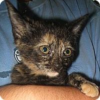 Adopt A Pet :: Valerie - Madison, AL