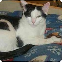 Adopt A Pet :: Patches - Newburgh, NY