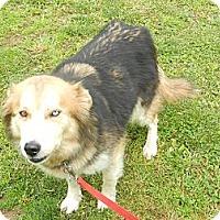 Adopt A Pet :: DeeDee - Allentown, PA