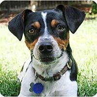Adopt A Pet :: Elwood - Concord, CA