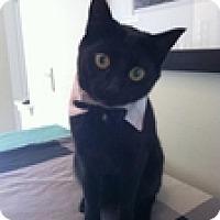 Adopt A Pet :: Martin - Vancouver, BC