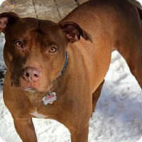Adopt A Pet :: Vinny - Indianapolis, IN
