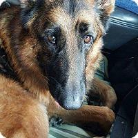 Adopt A Pet :: Magnum - Everett, WA