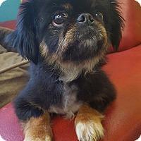 Adopt A Pet :: Coconut - Charlotte, NC