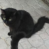 Adopt A Pet :: Bandit - Lauderhill, FL