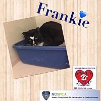 Adopt A Pet :: Frankie - Westbury, NY