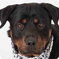 Adopt A Pet :: Zeus - Tracy, CA