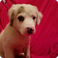 Adopt A Pet :: Tia  (has been adopted) - Trenton, NJ