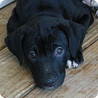 Adopt A Pet :: Douglas - Attalla, AL