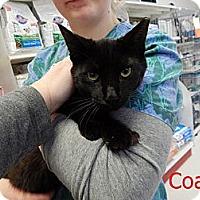 Adopt A Pet :: Coalie - Chilhowie, VA
