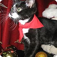 Adopt A Pet :: Puma - Clearfield, UT