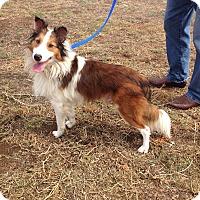 Adopt A Pet :: Skippy - San Diego, CA