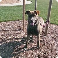 Adopt A Pet :: Walker - Los Angeles, CA