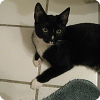 Adopt A Pet :: MS CHECKERS - Brea, CA