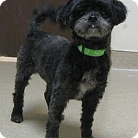 Adopt A Pet :: Fred - Gary, IN