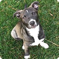 Adopt A Pet :: Cassie - Charlotte, NC