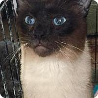 Adopt A Pet :: Merlin - Southlake, TX