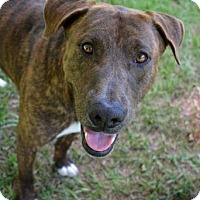 Adopt A Pet :: Tippy - Ridgeland, SC