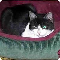 Adopt A Pet :: Missy - Hamilton, ON