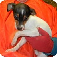 Adopt A Pet :: Harmony ADOPTED!! - Antioch, IL