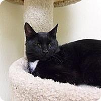 Adopt A Pet :: Izak - Norwich, NY