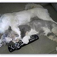 Adopt A Pet :: Gracie - Beverly Hills, CA
