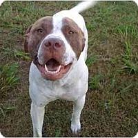 Adopt A Pet :: Oscar - DFW, TX