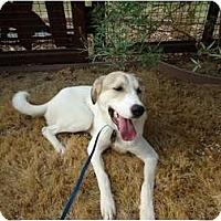Adopt A Pet :: Kennadi - Arlington, TX
