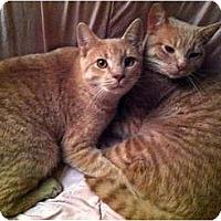 Adopt A Pet :: Peanut & Mahoney - Alexandria, VA