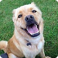 Adopt A Pet :: Kenya- Adopted! - Detroit, MI