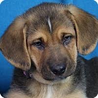 Adopt A Pet :: Trini - Minneapolis, MN