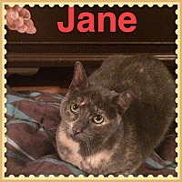 Adopt A Pet :: Jane - Brentwood, NY