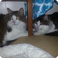 Adopt A Pet :: Ben (Courtesy Listing) - Richmond, VA