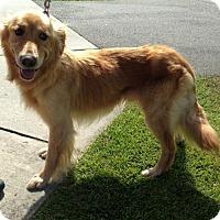 Adopt A Pet :: Lucky - Murrells Inlet, SC