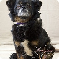 Adopt A Pet :: Gidget - Oklahoma City, OK