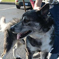 Husky Mix Dog for adoption in Hopkinsville, Kentucky - Koda