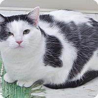 Adopt A Pet :: Brenna - Chambersburg, PA