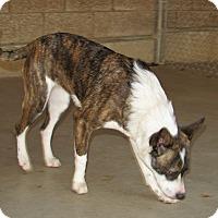 Adopt A Pet :: Riri - Ruidoso, NM