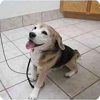 Adopt A Pet :: Copper 2 - Phoenix, AZ