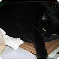 Adopt A Pet :: Mr. Big - Quincy, MA