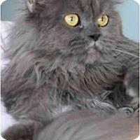 Adopt A Pet :: Riley - Columbus, OH