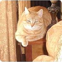 Adopt A Pet :: Sonny - Morris, PA