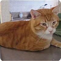 Adopt A Pet :: Garfield - Winter Haven, FL