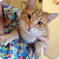 Adopt A Pet :: Marty - Troy, OH