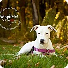 Adopt A Pet :: Dulce