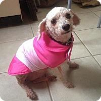 Adopt A Pet :: Alpine - Hamilton, ON