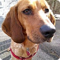Adopt A Pet :: Ruby - in Maine - kennebunkport, ME