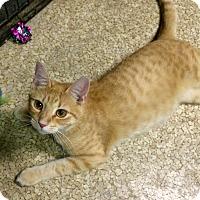 Adopt A Pet :: Davey - Chattanooga, TN