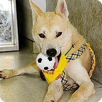 Adopt A Pet :: Lester - Surrey, BC